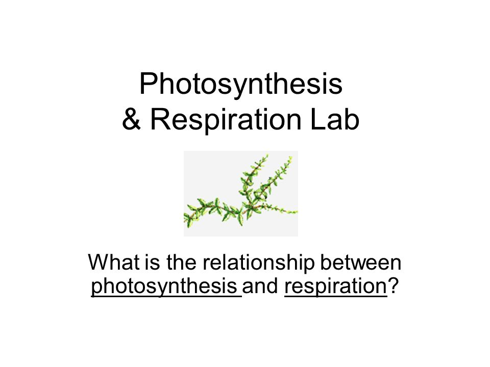 Photosynthesis & Respiration Lab