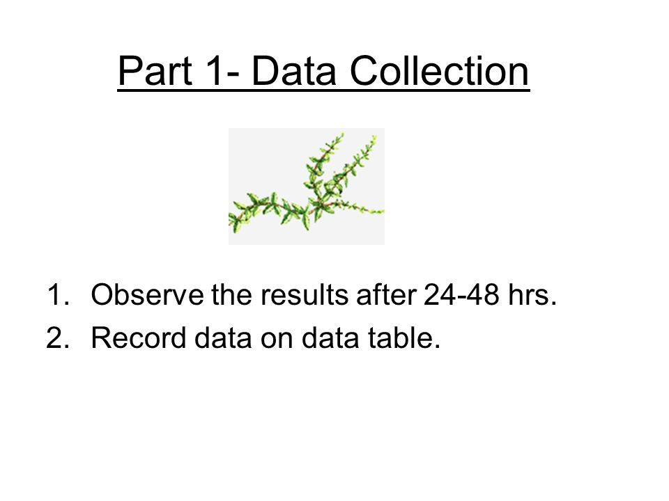 Part 1- Data Collection Observe the results after 24-48 hrs.