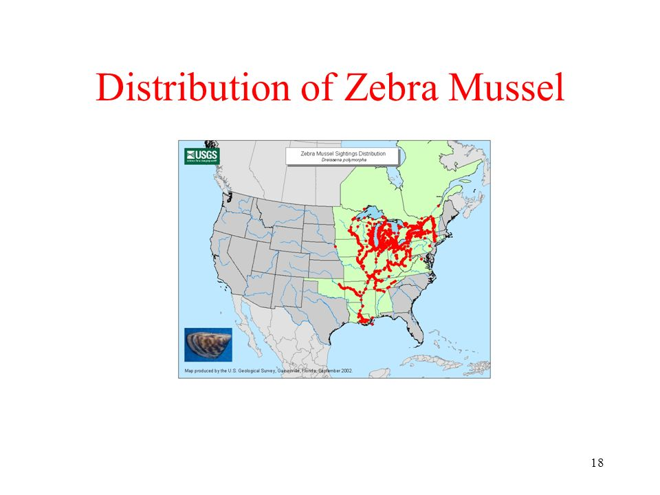 Distribution of Zebra Mussel