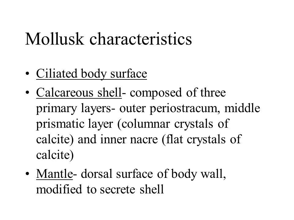 Mollusk characteristics