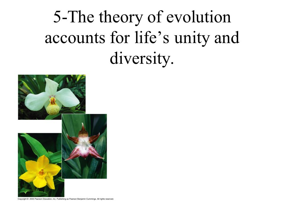 5-The theory of evolution accounts for life's unity and diversity.