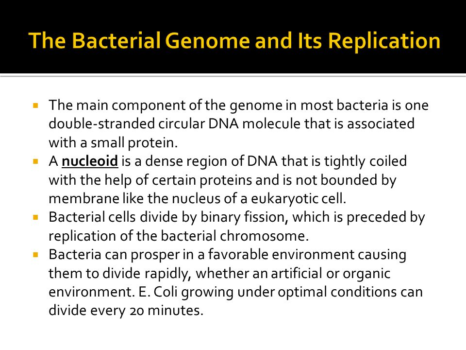 The Bacterial Genome and Its Replication