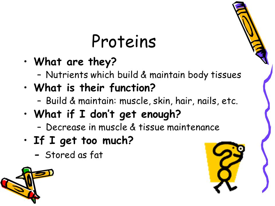 Proteins What are they What is their function