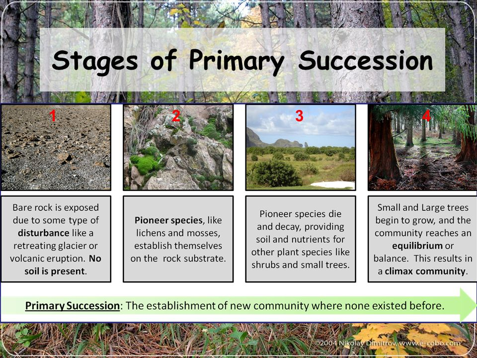 ecological succession a result of changes in the ecosystems Learn more about how ecosystems change over time primary and secondary succession both create a continually changing mix of species within communities as disturbances of different intensities, sizes, and frequencies alter the landscape.