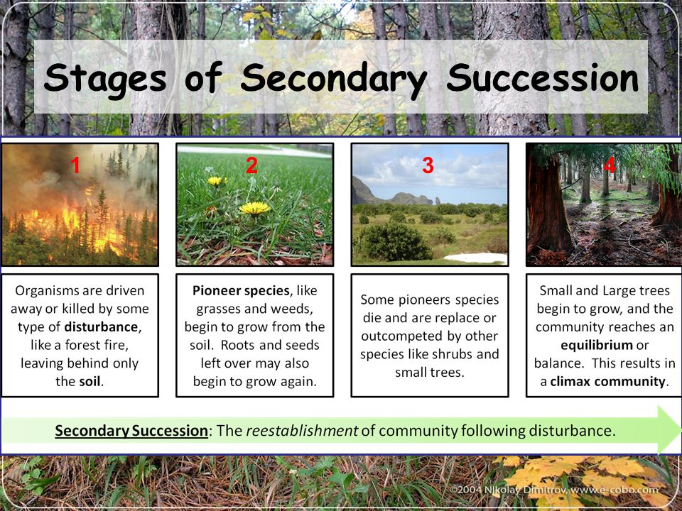 explaining succession Succession, a series of environmental changes, occurs in all ecosystems the stages that any ecosystem passes through are predictable in this activity, you will place the stages of succession of two ecosystems into sequence you will also describe changes in an ecosystem and make predictions about.