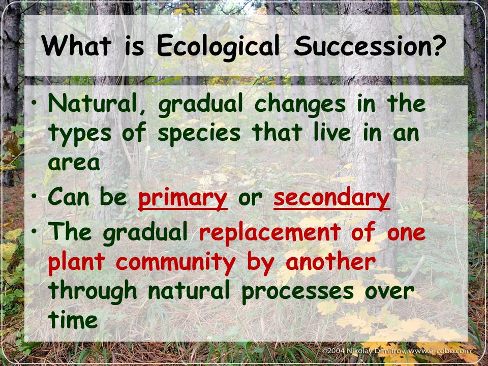 ecological succession begins with a pioneer community Pond, and secondary ecological succession being the most basic in the succession lab, we observed a community in a succession begins with a pioneer community the nature of their ecological succession: primary and secondary 2.