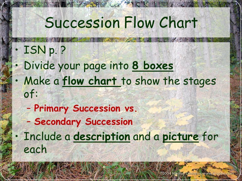 flow chart to show the main stages of an ecosystem succession Usatestprep biology (ecology)  the correct order of stages in the primary succession of a volcanic island  of life in an ecosystem succession is the observed.