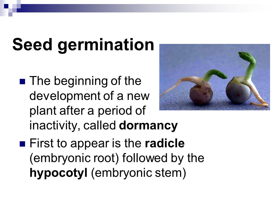 Seed germination The beginning of the development of a new plant after a period of inactivity, called dormancy.