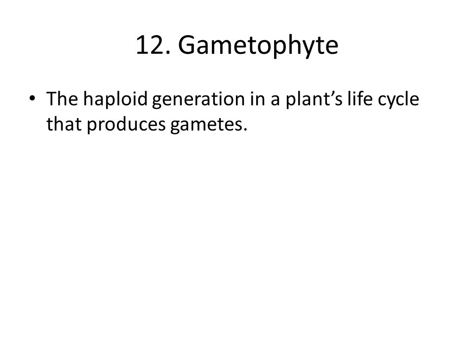 12. Gametophyte The haploid generation in a plant's life cycle that produces gametes.