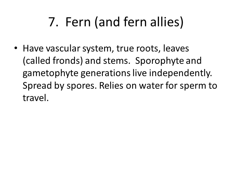 7. Fern (and fern allies)