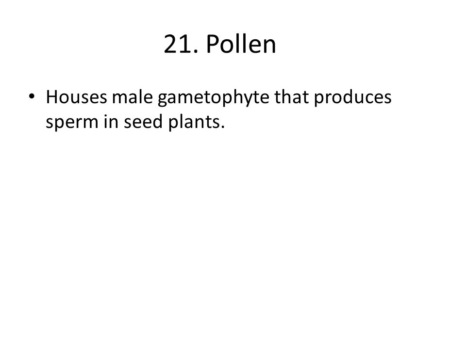 21. Pollen Houses male gametophyte that produces sperm in seed plants.