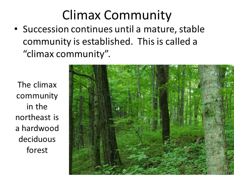 Ecological succession ppt video online download the climax community in the northeast is a hardwood deciduous forest publicscrutiny Choice Image