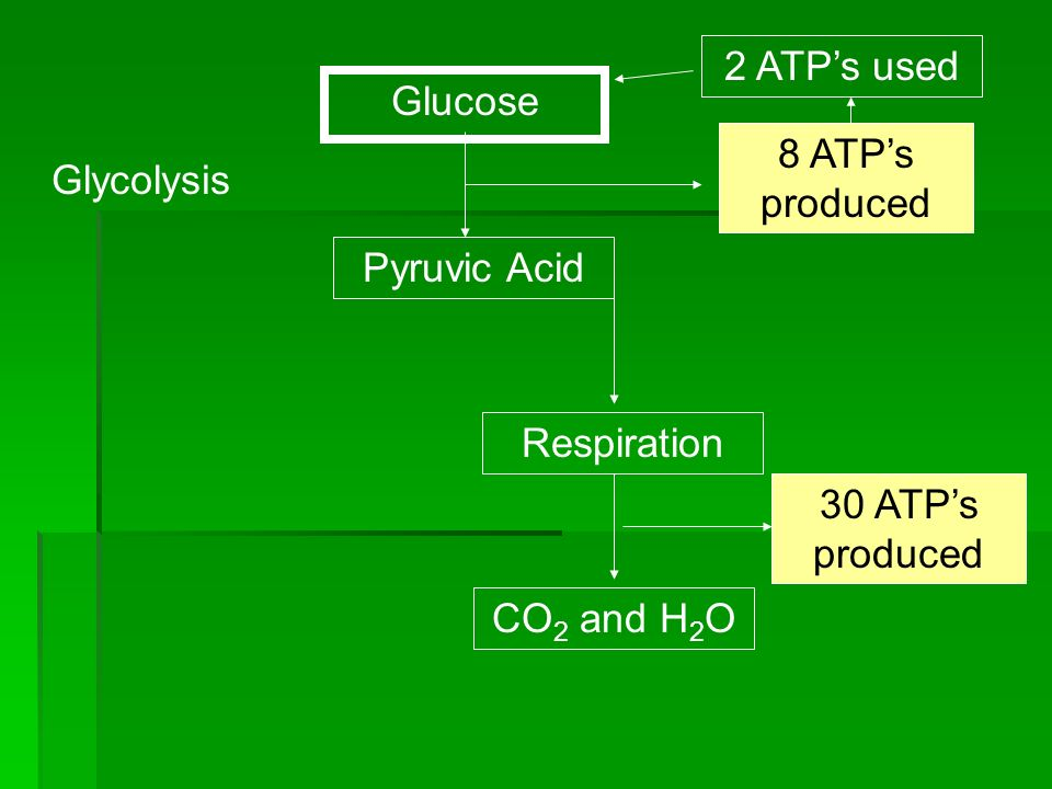 2 ATP's used Glucose. 8 ATP's produced. Glycolysis. Pyruvic Acid. Respiration. 30 ATP's produced.