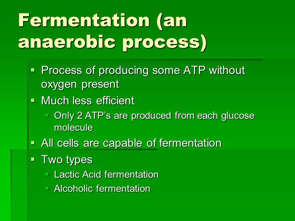 Fermentation (an anaerobic process)