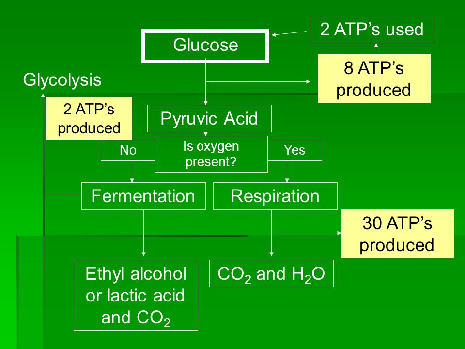 Ethyl alcohol or lactic acid and CO2