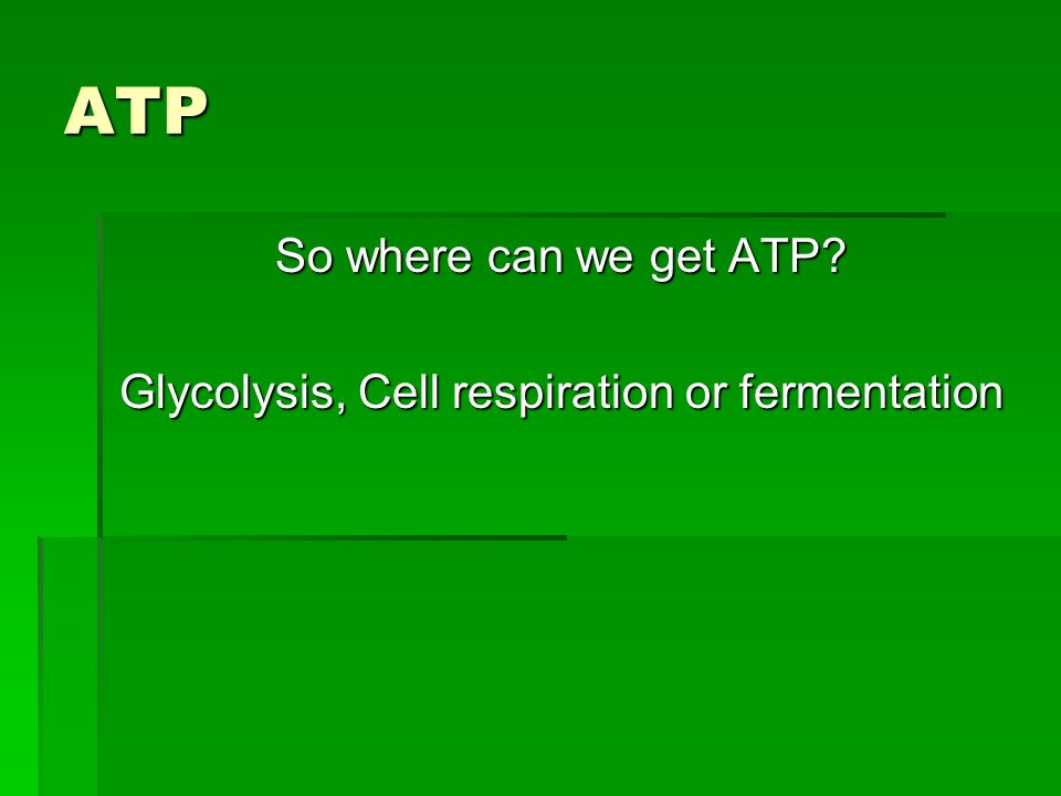 Glycolysis, Cell respiration or fermentation