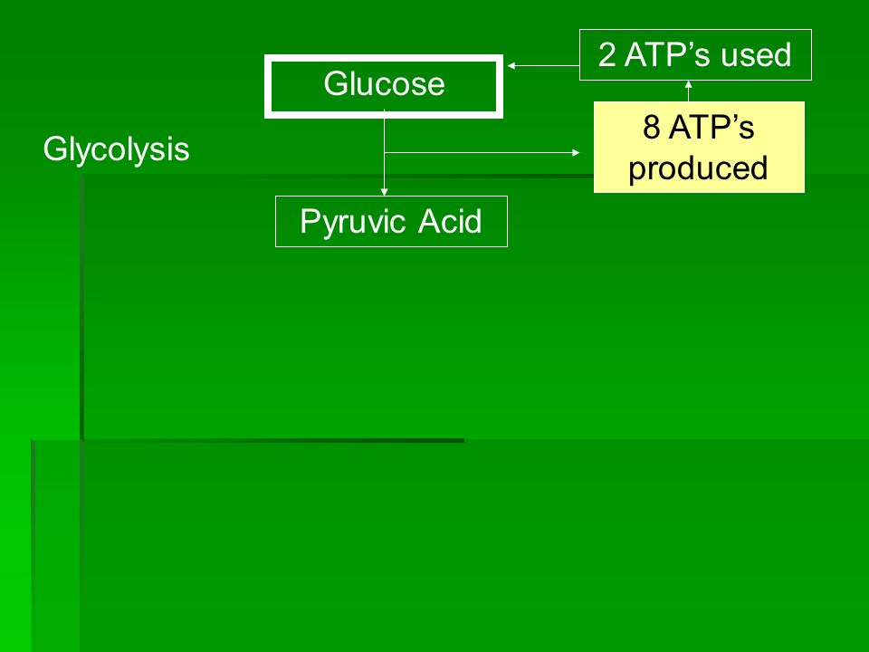 2 ATP's used Glucose 8 ATP's produced Glycolysis Pyruvic Acid