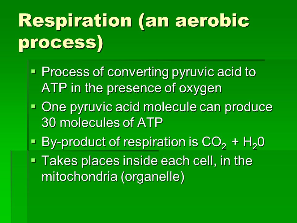 Respiration (an aerobic process)