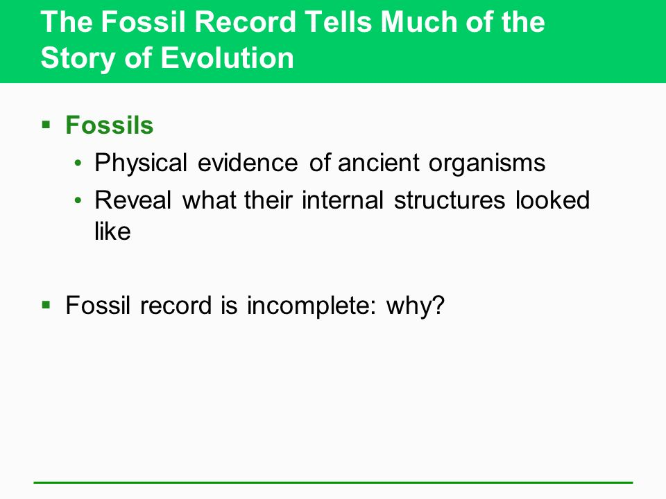 The Fossil Record Tells Much of the Story of Evolution