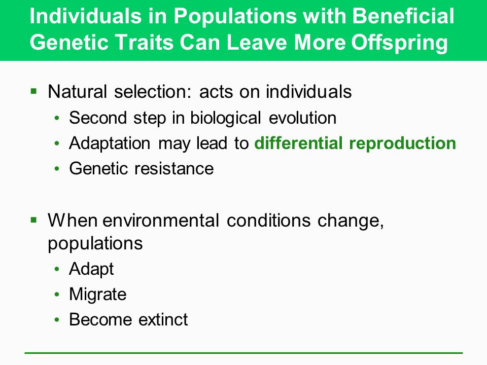Individuals in Populations with Beneficial Genetic Traits Can Leave More Offspring