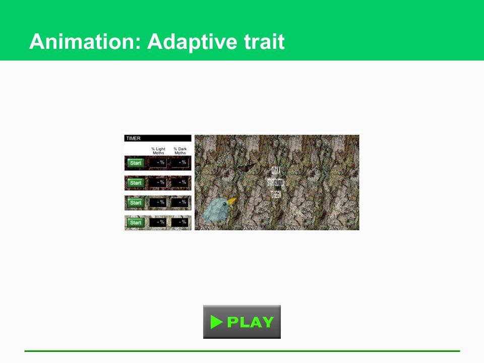 Animation: Adaptive trait