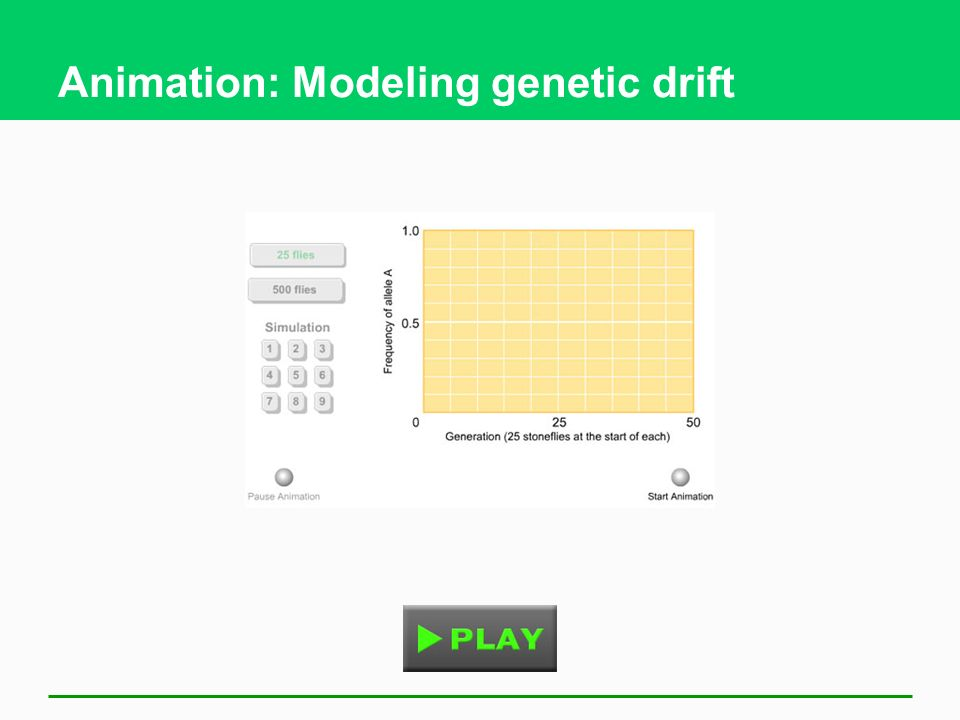 Animation: Modeling genetic drift
