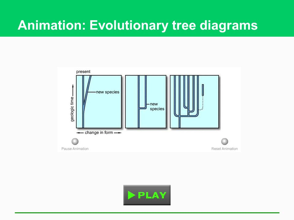 Animation: Evolutionary tree diagrams