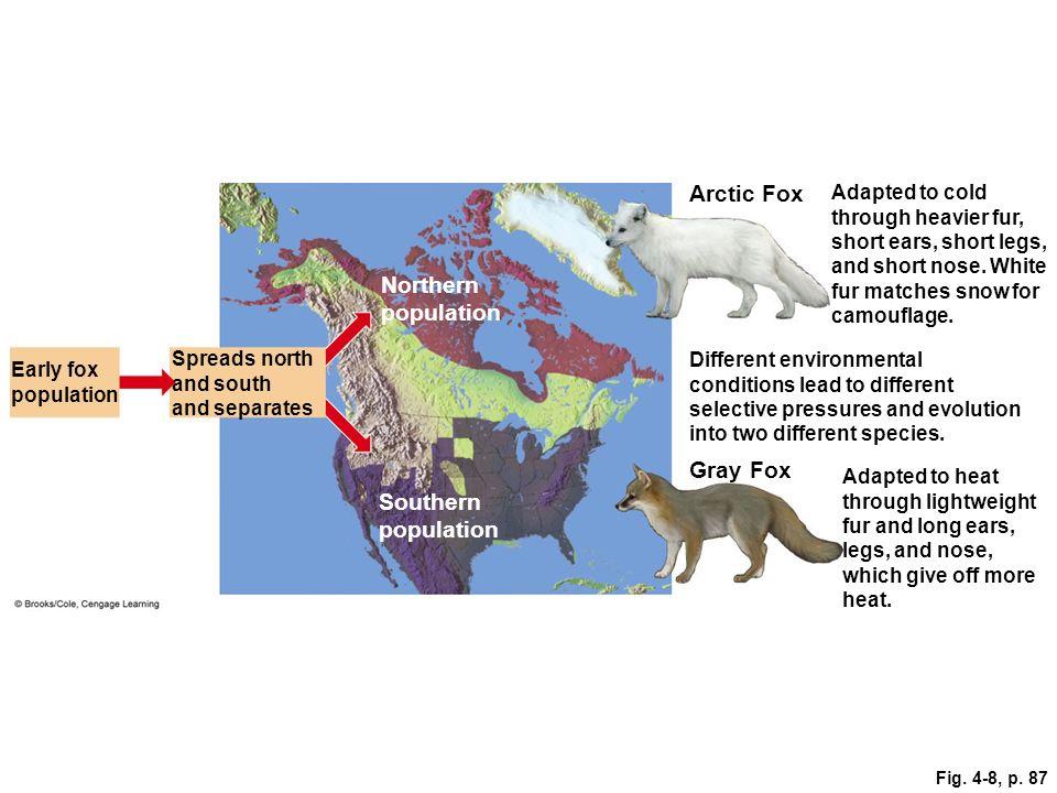 Arctic Fox Northern population Gray Fox Southern population
