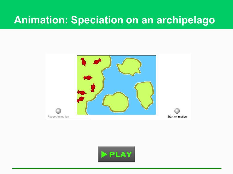 Animation: Speciation on an archipelago