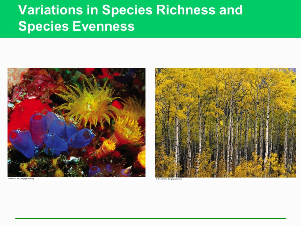 Variations in Species Richness and Species Evenness