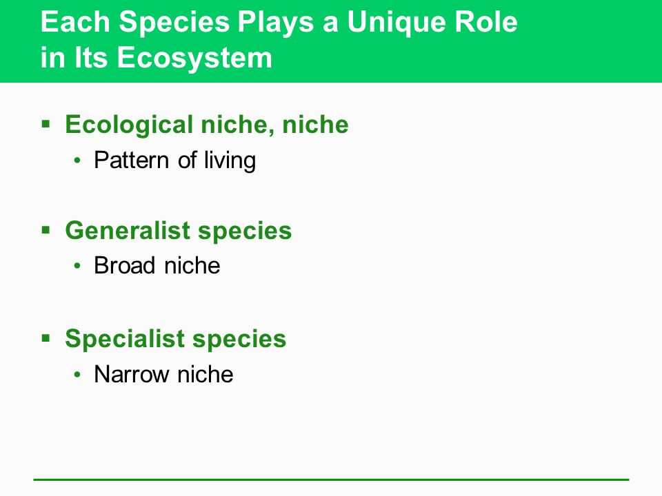 Each Species Plays a Unique Role in Its Ecosystem