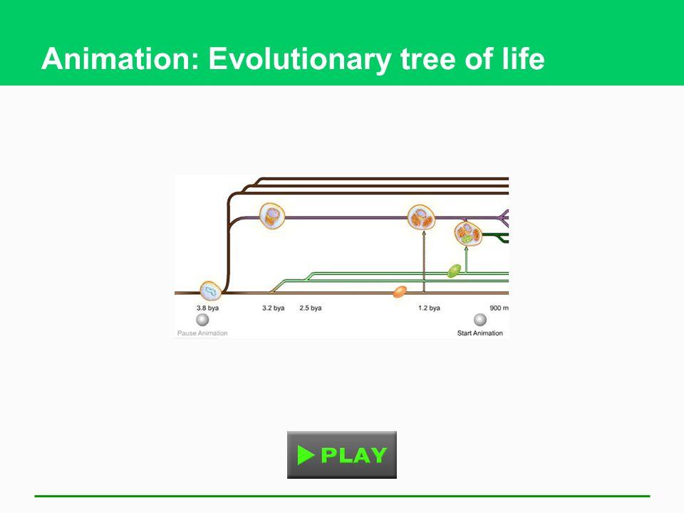 Animation: Evolutionary tree of life