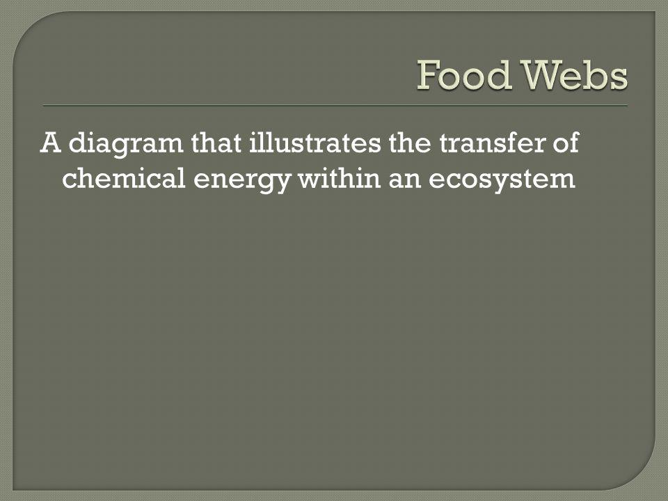 Food Webs A diagram that illustrates the transfer of chemical energy within an ecosystem