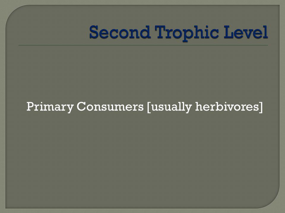 Second Trophic Level Primary Consumers [usually herbivores]