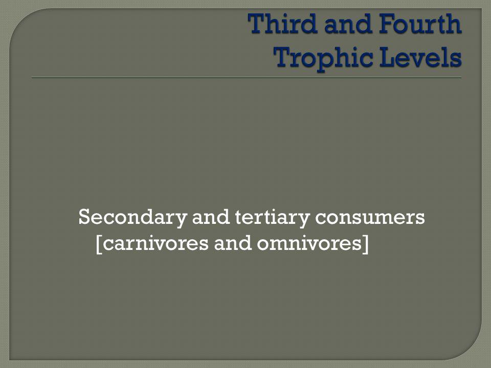 Third and Fourth Trophic Levels