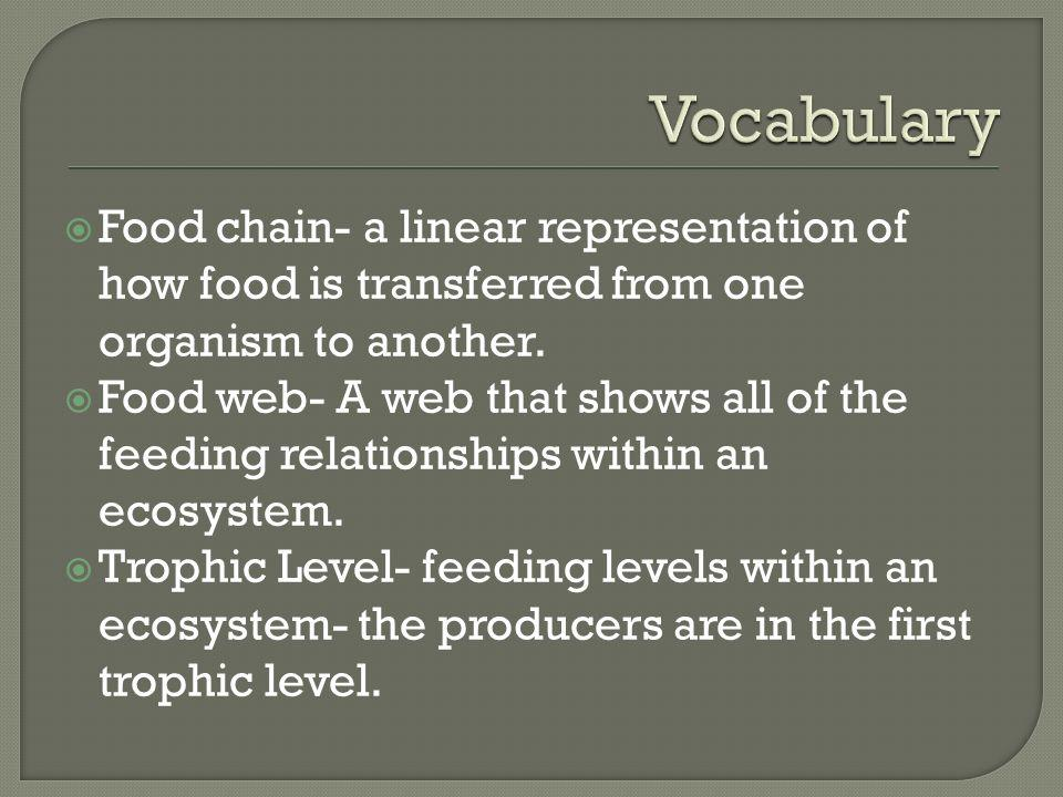 Vocabulary Food chain- a linear representation of how food is transferred from one organism to another.