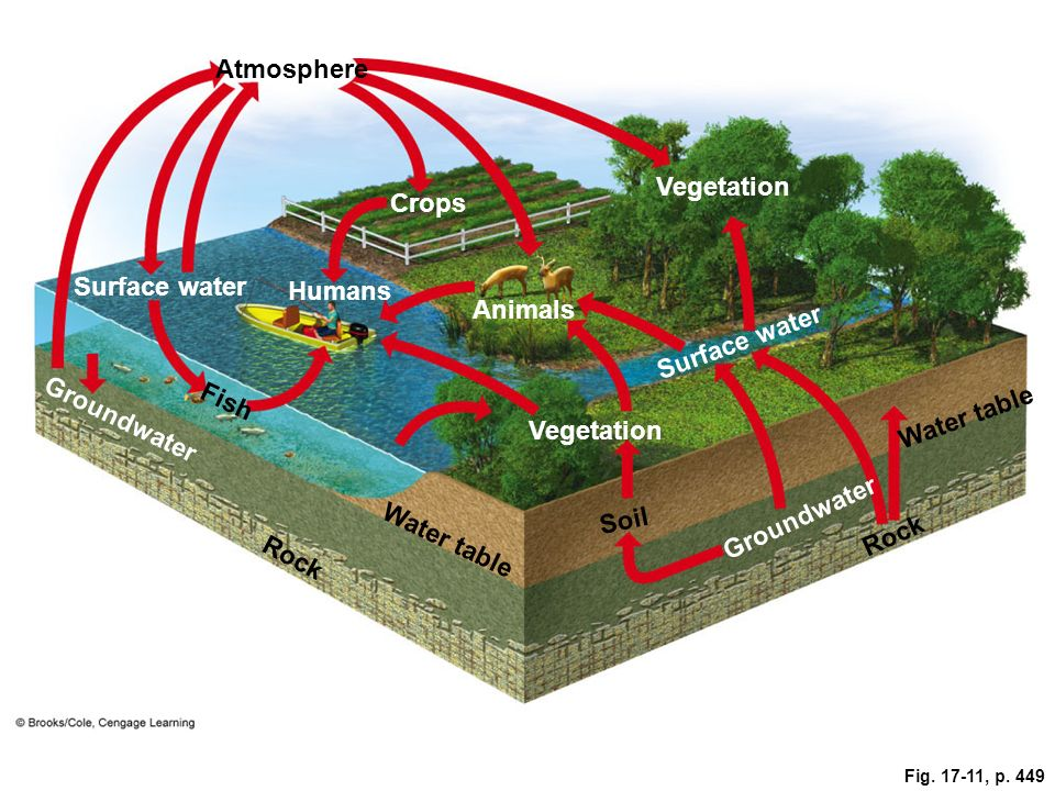 Atmosphere Vegetation Crops Surface water Humans Animals Surface water