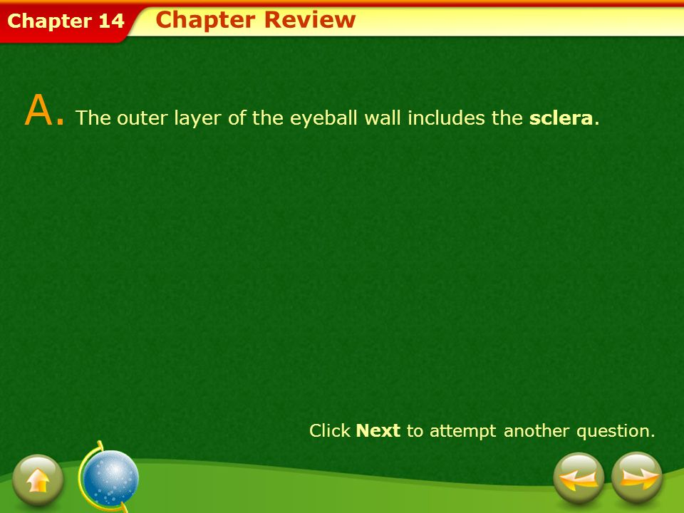 A. The outer layer of the eyeball wall includes the sclera.