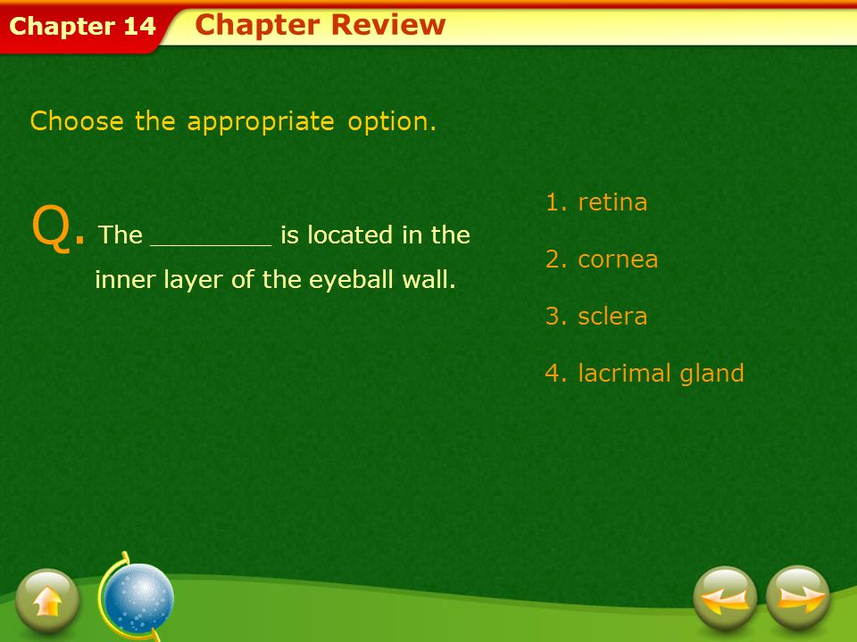 Q. The ________ is located in the inner layer of the eyeball wall.