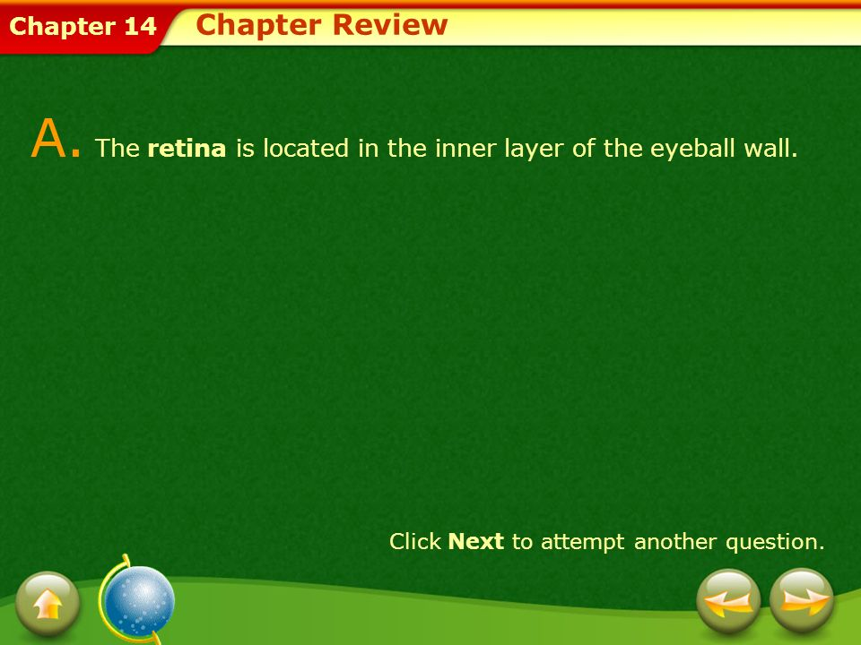 A. The retina is located in the inner layer of the eyeball wall.