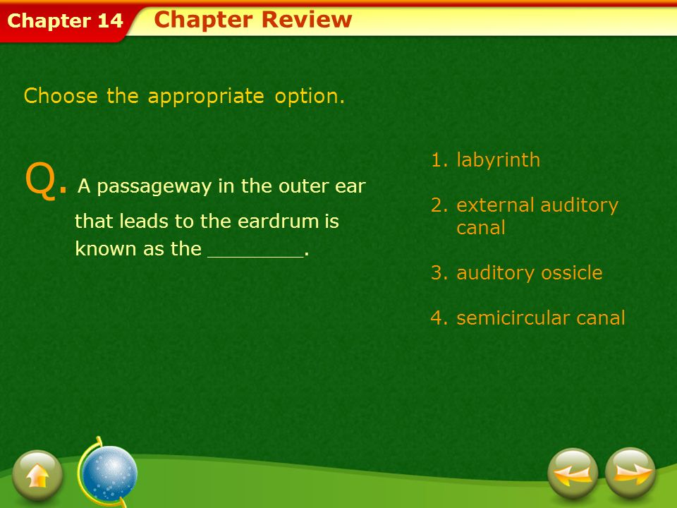 Chapter Review Choose the appropriate option. Q. A passageway in the outer ear that leads to the eardrum is known as the ________.