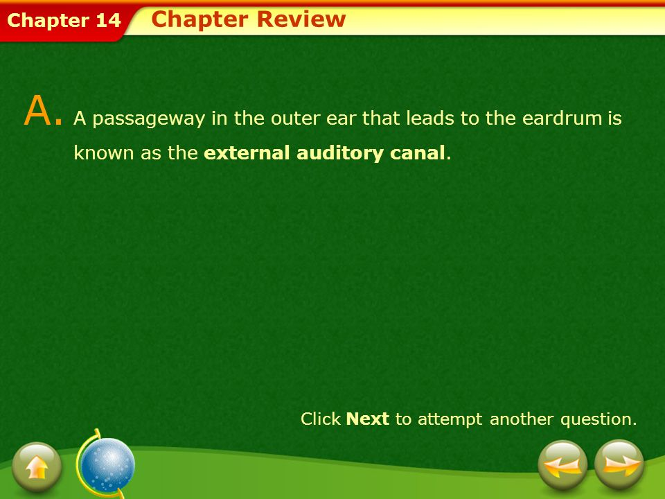 Chapter Review A. A passageway in the outer ear that leads to the eardrum is known as the external auditory canal.
