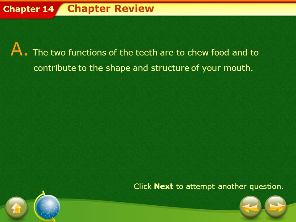 Chapter Review A. The two functions of the teeth are to chew food and to contribute to the shape and structure of your mouth.