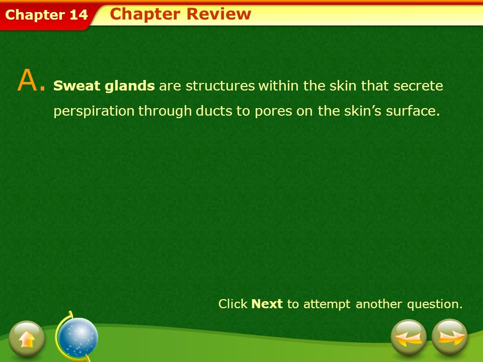 Chapter Review A. Sweat glands are structures within the skin that secrete perspiration through ducts to pores on the skin's surface.