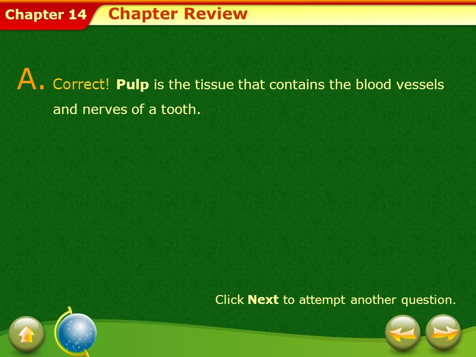 Chapter Review A. Correct! Pulp is the tissue that contains the blood vessels and nerves of a tooth.
