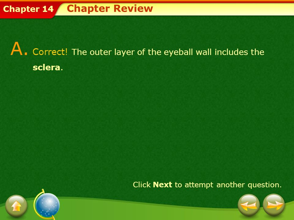 A. Correct! The outer layer of the eyeball wall includes the sclera.