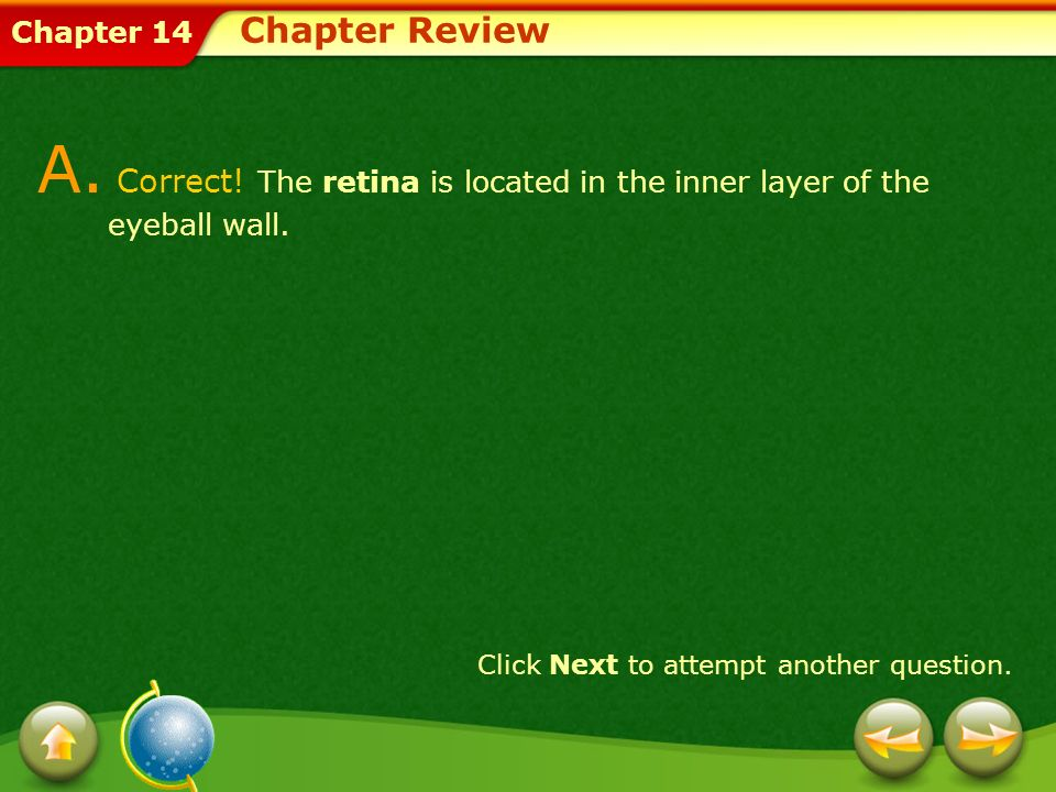 Chapter Review A. Correct. The retina is located in the inner layer of the eyeball wall.