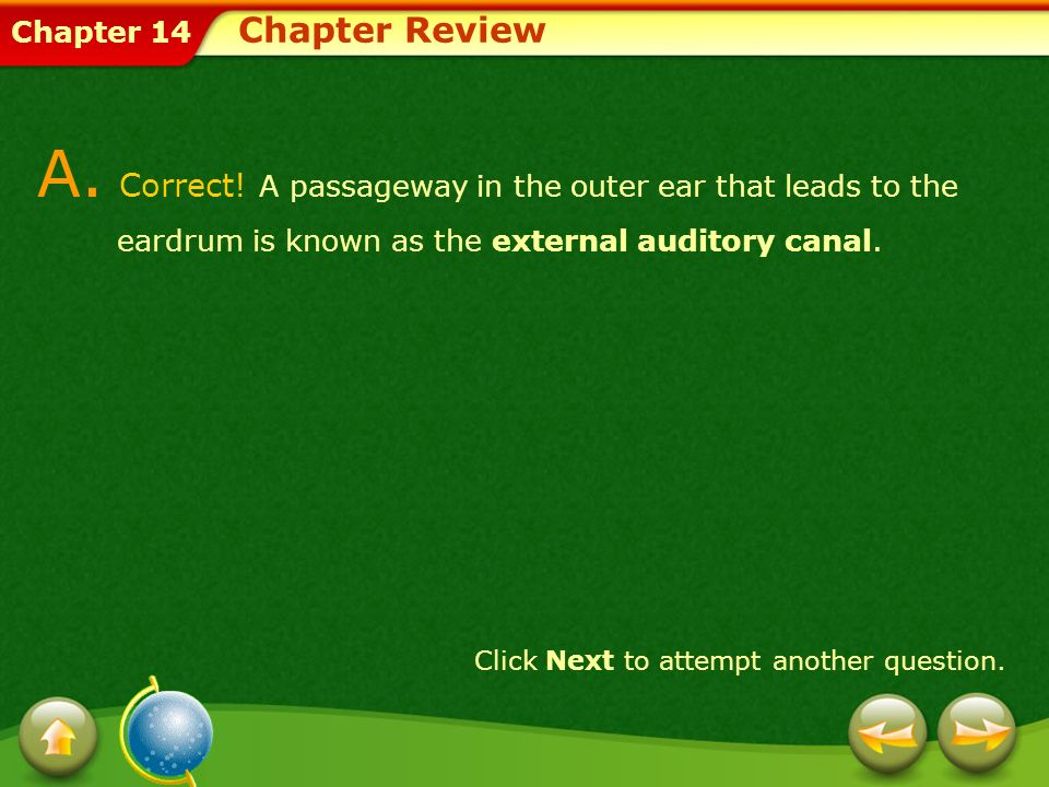 Chapter Review A. Correct! A passageway in the outer ear that leads to the eardrum is known as the external auditory canal.
