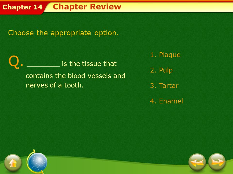 Chapter Review Choose the appropriate option. Q. ________ is the tissue that contains the blood vessels and nerves of a tooth.