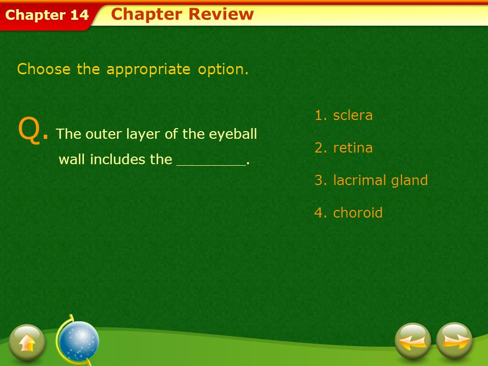 Q. The outer layer of the eyeball wall includes the ________.
